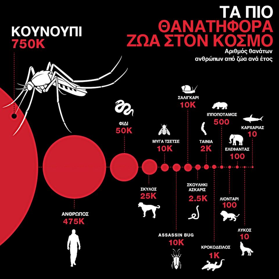 κουνούπια, τα πιο θανατηφόρα ζώα στον κόσμο